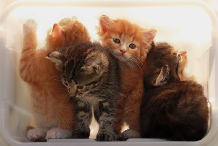 get out: Kittens try to get out of a light box