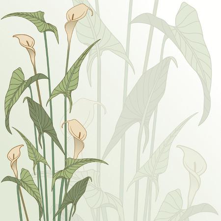 muguet fond blanc: floral cadre de calla lily Illustration