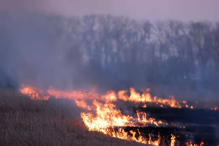 forest fire: Fire of grass at sunset
