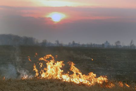 Fire of grass at sunset  photo
