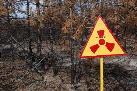 Dead forest.Near Chernobyl area.Kiev region,Ukraine Stock Photo - 7515772