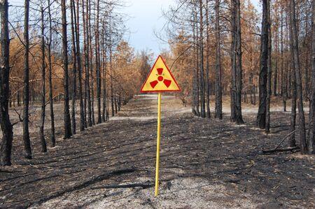 Dead forest.Near Chernobyl area.Kiev region,Ukraine Stock Photo - 7515780