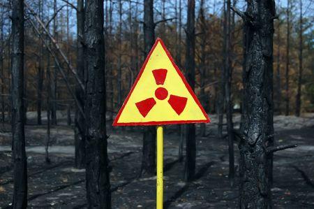 Dead forest.Near Chernobyl area.Kiev region,Ukraine Stock Photo - 7515695