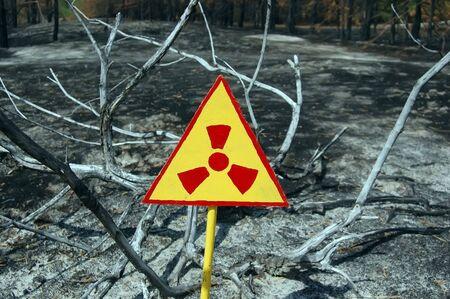 Dead forest.Near Chernobyl area.Kiev region,Ukraine Stock Photo - 7515727