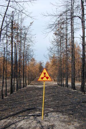 Dead forest.Near Chernobyl area.Kiev region,Ukraine Stock Photo - 7515777