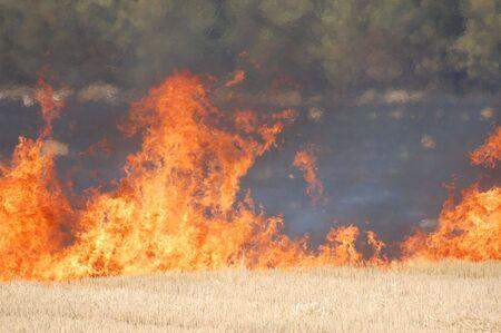 Fire of grass  photo