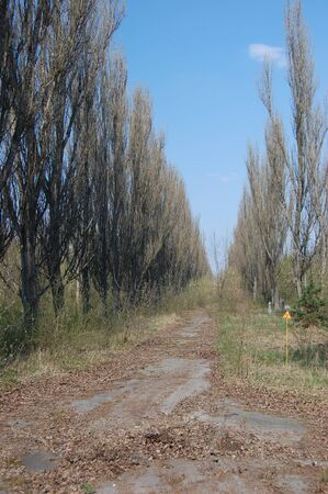 City park.Chernobyl area. Lost city Pripyat. Ukraine. Kiev region Stock Photo - 8328073