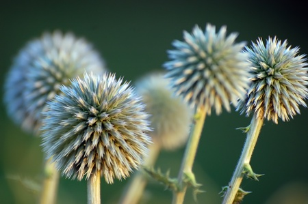 pokey: close up shot of thorny plant in nature  Stock Photo