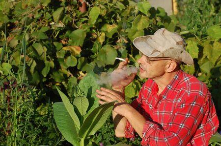 Ukrainian peasant and tobacco plant photo