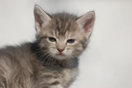 baby cat  Stock Photo - 14929016