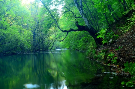 Nature of Crimean Peninsula,Ukraine photo