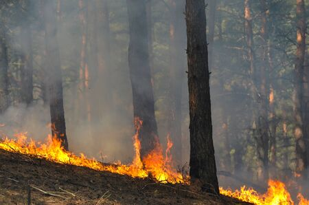 destroy: Severe drought. Fires destroy forest and steppe. Near Kiev, Ukraine.