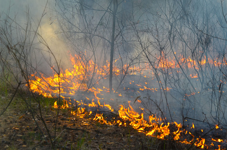 Severe drought. Fires destroy forest and steppe. Near Kiev, Ukraine.