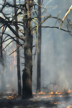 to get warm: Severe drought. Fires destroy forest and steppe. Near Kiev, Ukraine.