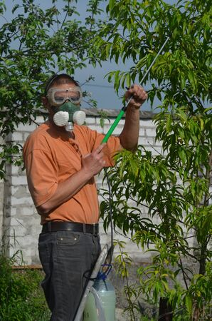 Man spraying tree in the garden photo