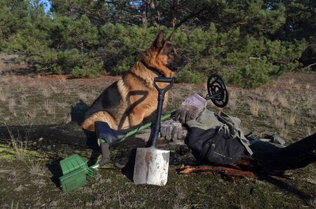 German shepherd dog with metal detector and shovel Stock Photo