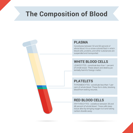 Infographics of blood composition. Tubes of blood and four components with description for articles or other media