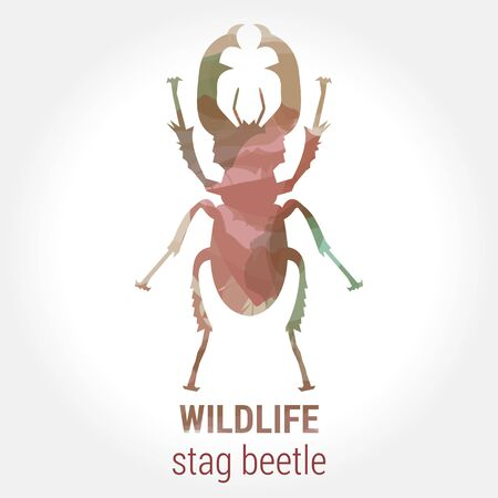 entomology: Wildlife banner on white background. Colored watercolor big brown silhouette stag beetle with horns. Poster for entomology, journey, park culture. Illustration