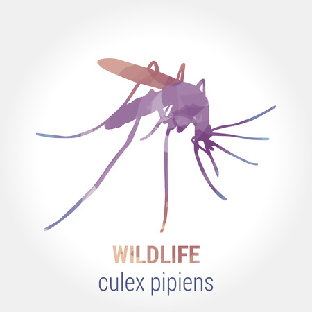 extreme science: Wildlife banner on white background. Colored watercolor silhouette insects - mosquito.  Poster for entomology, journey, park culture, medicine. Vector illustration