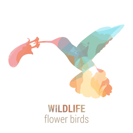 the ornithology: Wildlife banner on white background. Colored watercolor silhouette bird colibri flower.  Poster for ornithology, journey, park culture.
