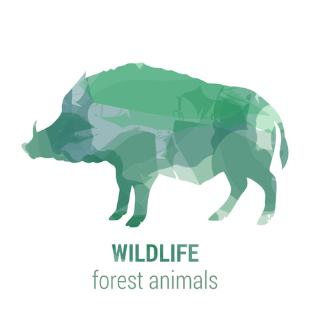 mammals: Wildlife banner on white background. Colored watercolor silhouette forest animal boar .  Poster for mammals, journey, park culture.