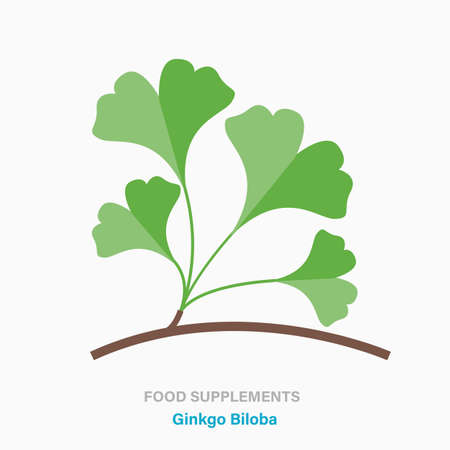 Vector flat isolated icon of food supplements - Ginkgo Biloba
