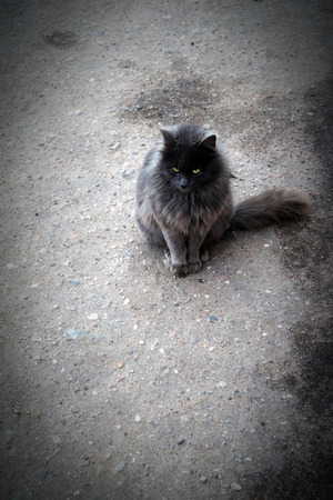 grey cat: Picture of grey cat on road. Stock Photo