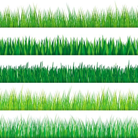 grass close up: Green grass set. Isolated on white background