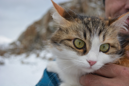 Beautiful cat in hand on the mountains background