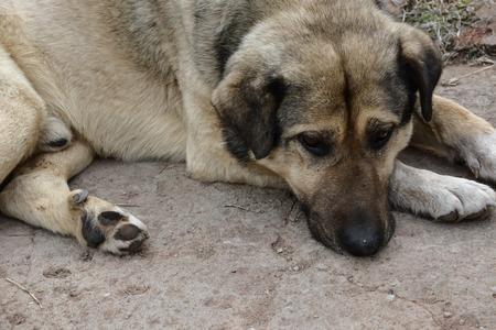 Close up dog lying on the ground. Stock Photo