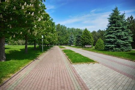 Flat avenue landscape. The sidewalk in the park with cypresses on the sides.