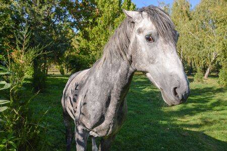 Young grey horse in the park near the trees.