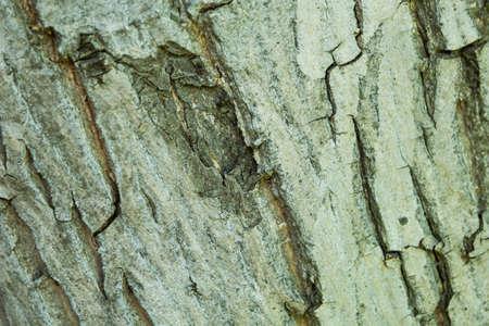 Tree bark texture. Wood material.