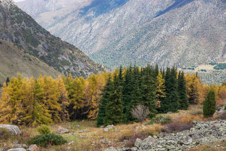 Mountain landscape view in Kyrgyzstan. Rocks, yellow and green trees in mountain valley view. Fall mountain panorama. Archivio Fotografico - 156563936