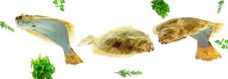variety of fresh raw turbotfish isolated on white background Stock Photo