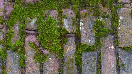 Bricks and brickwork walls. Moss on the wall of an old castle