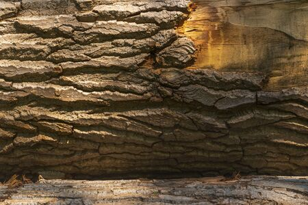 Log surface structure. Stumps and logs. Overexploitation leads to deforestation endangering environment and sustainability. Timber logging industry banner Reklamní fotografie
