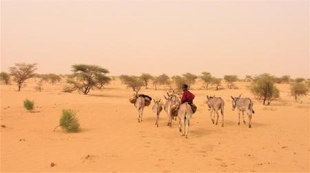 shepherd in the desert Stock Photo
