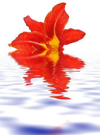 orange lily  close-up flora background Stock Photo - 3550220