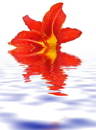 orange lily  close-up flora background Stock Photo - 3550220