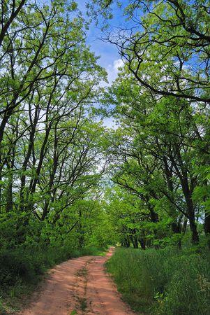 winding path through savannah forest with sun beams