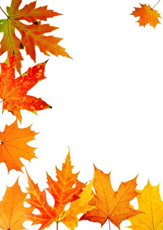 autumn maple-leaf, frame for a postal on a white background photo