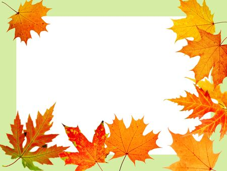 autumn maple-leaf, scope for a postal on a white background