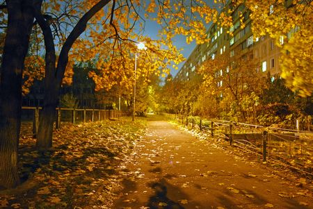 Avenue in city area. Night and autumn. Stock Photo - 3936611