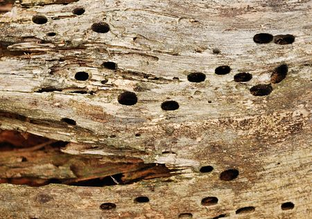 texture of the old spoiled wood damaged by woodworm