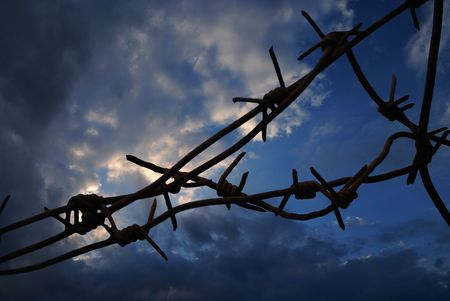 concentration camp: bleack barbed wire closeup on white background  Stock Photo