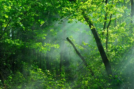 thorn bush: Green vegetative background , forest and sunbeams Stock Photo