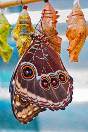 washed out: exotic tropical butterfly on the washed out background