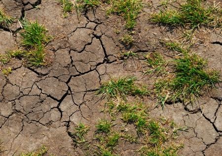 scheuren in de droge, de aarde wil water
