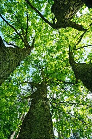 spring landscape, tree on a sky background Stock Photo - 7720513